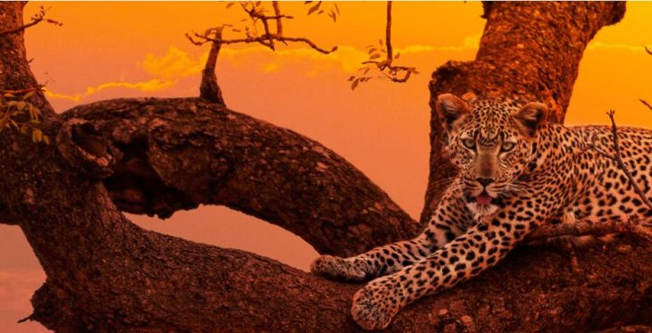 Animals and nature in South Africa