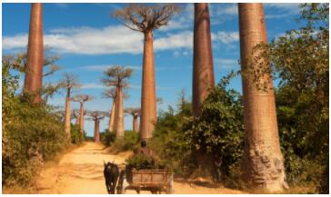 The scenic Madagascar 2